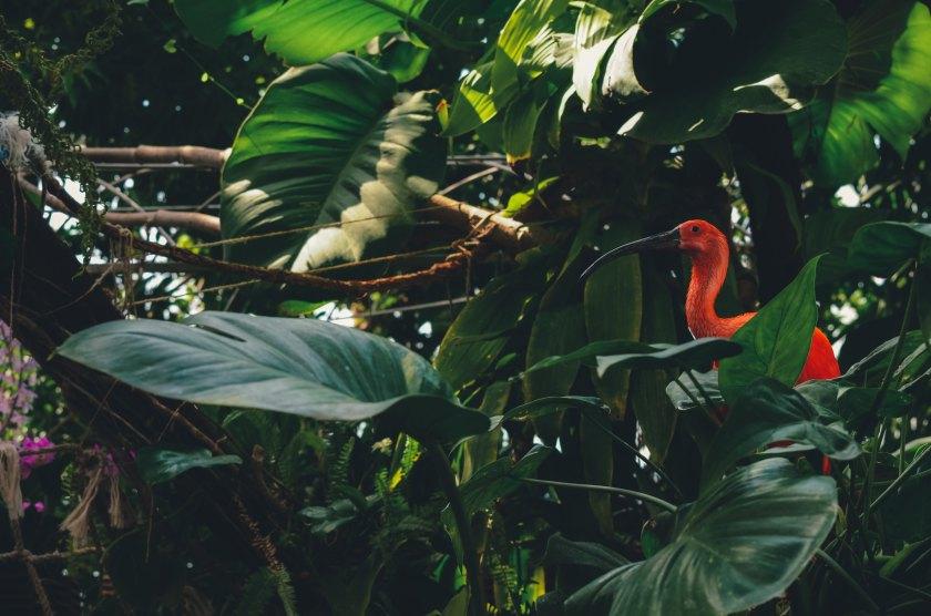 Oiseau au milieu de la forêt tropicale